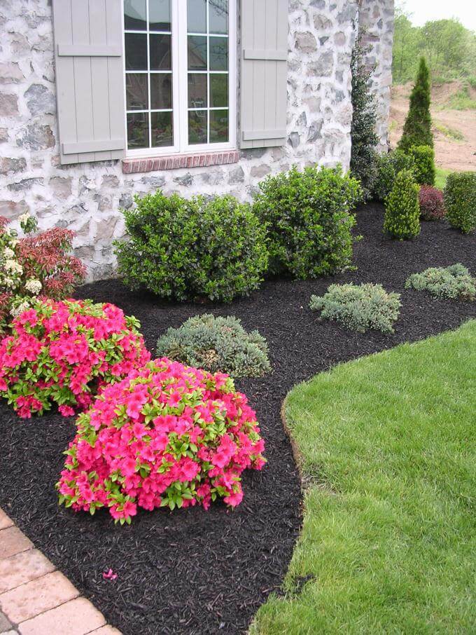 Color Pop Flowers with Evergreen Border