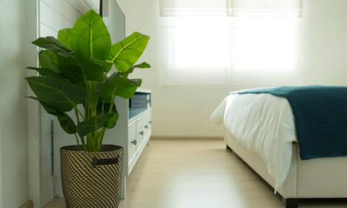 Green Plants - Bedroom Makeover Ideas