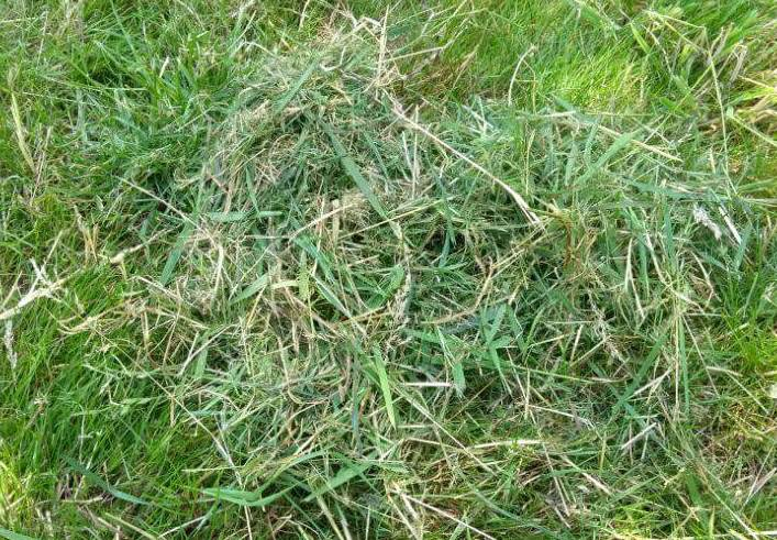 How to Dispose of Grass Clippings After Mowing
