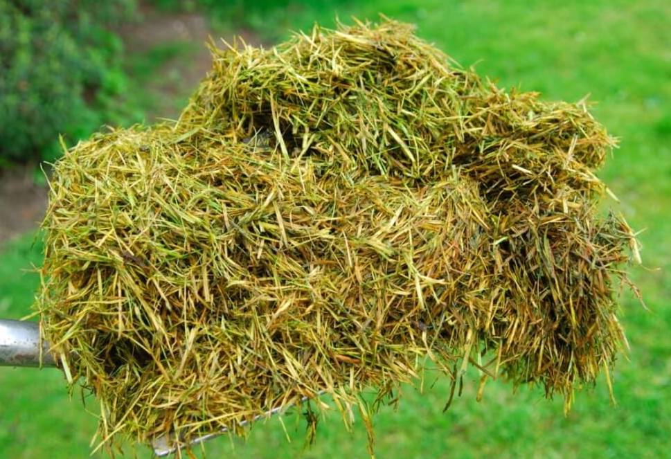Turning Grass Clipping into Compost or Mulch