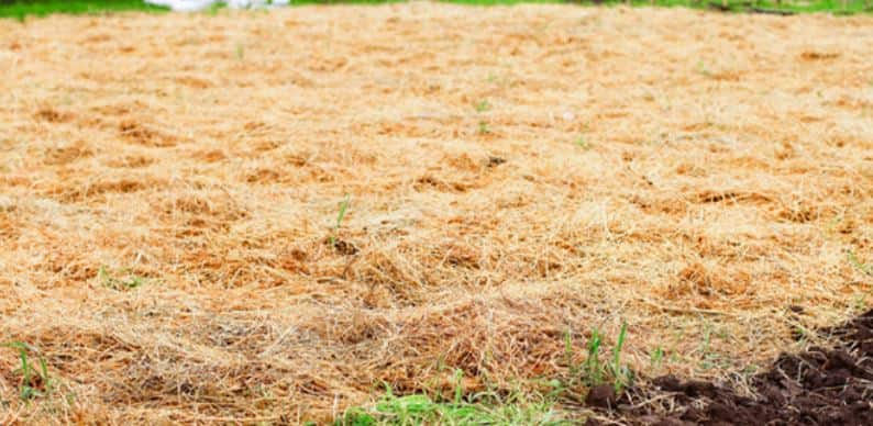 Cover the muddy yard with straw as a temporary fix