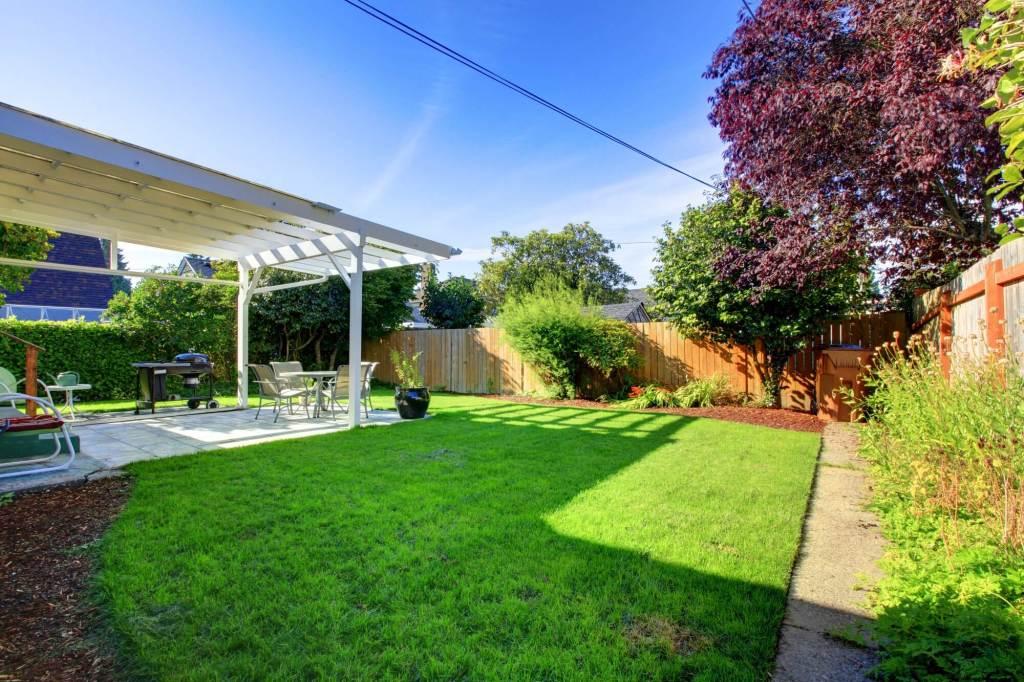 Clean and Green Backyard