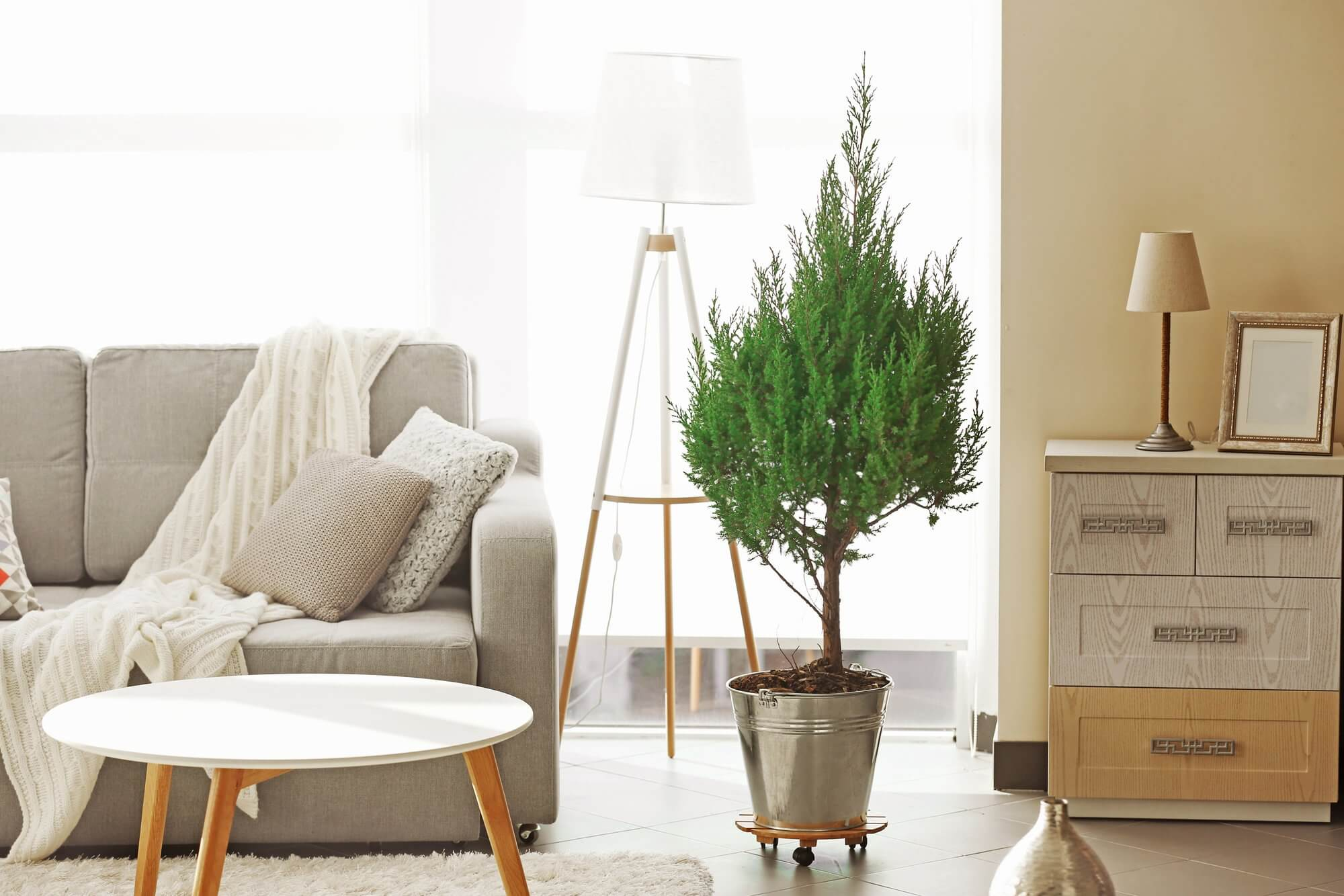 Potted Pines - Living Room Decor Ideas
