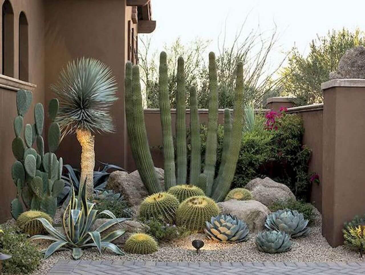 Cactus - Desert Landscaping Ideas