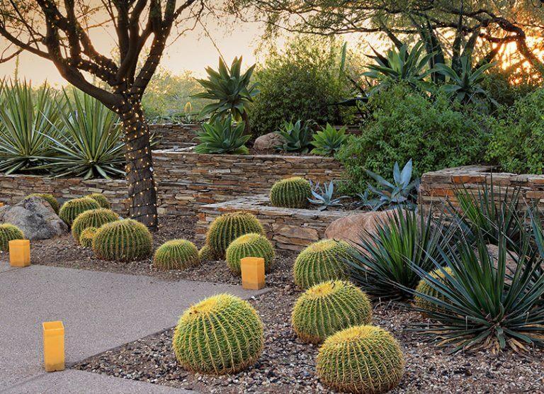 Desert landscaping ideas for your backyard