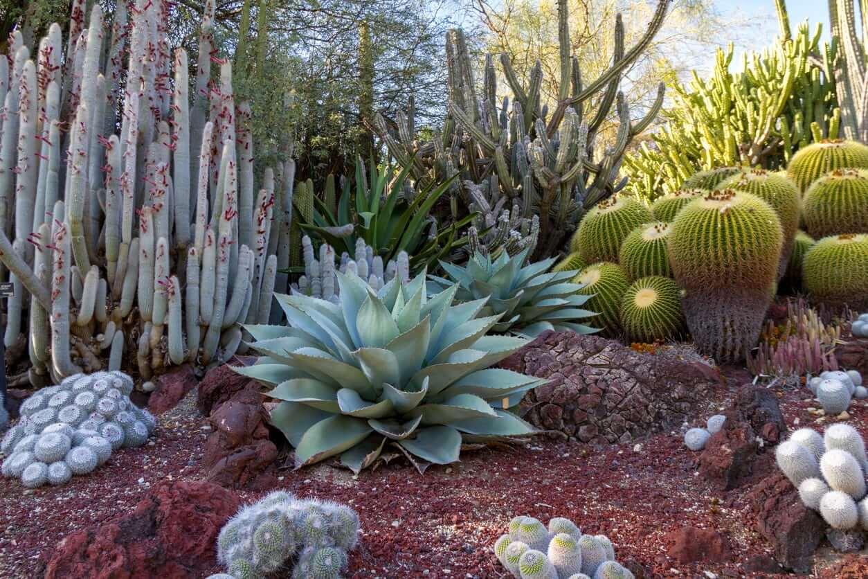 Southwestern-Style Plants - Desert landscaping Ideas