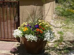 Using Pot Plants - Desert landscaping ideas