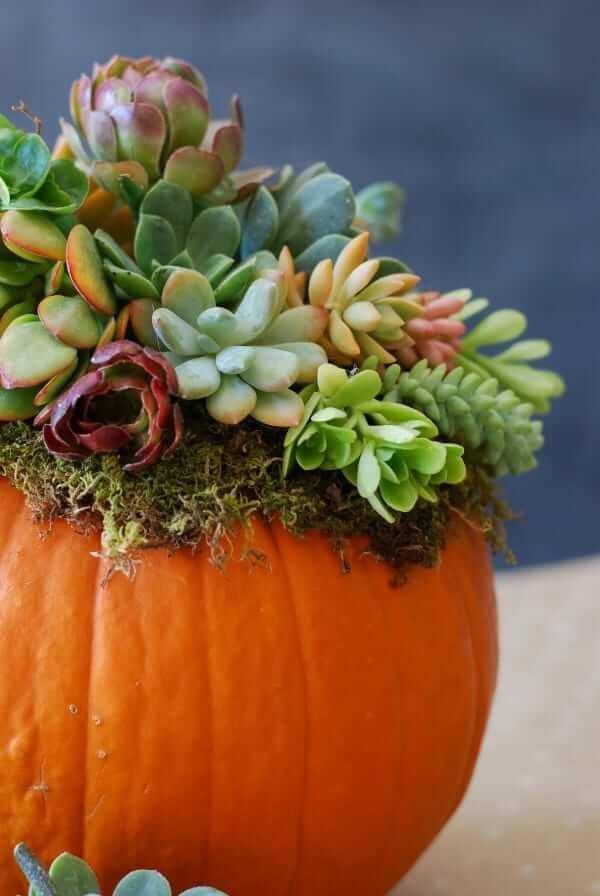 Succulent planter pumpkin